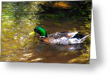 A Male Mallard Duck 3 Greeting Card