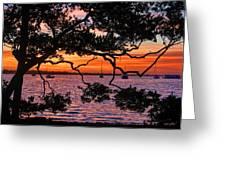 A Mangrove Morning Greeting Card