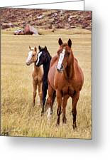 A Mare And Two Friends Greeting Card