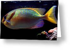 A Maze Ing Fish Greeting Card