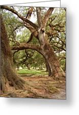 A Maze Of Oak Trees  Greeting Card