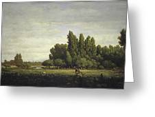 A Meadow Bordered By Trees Greeting Card