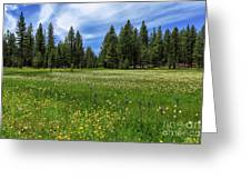 A Meadow In Lassen County Greeting Card