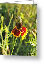 A Mexican Hat Flora Portrait Greeting Card