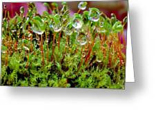 A Microcosm Of The Forest Of Moss In Rain Droplets Greeting Card