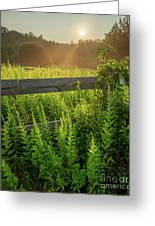 A Midsummer's Morn - Misty Sunrise Over Connecticut Meadow Greeting Card