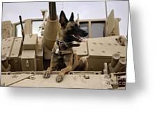 A Military Working Dog Sits On A U.s Greeting Card