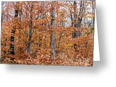 A Mixture Of Orange Greeting Card
