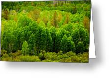 A Moment Of Green Greeting Card