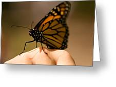 A Monarch Butterfly At The Butterfly Greeting Card