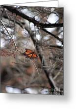 A Monarch For Granny Greeting Card