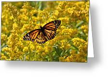 A Monarch World Greeting Card