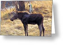 A Moose In Early Spring  Greeting Card
