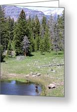 A Moose In The Rockies Greeting Card