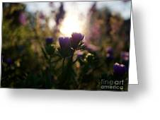 A Morning Light  Greeting Card
