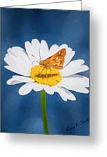 A Moth Collects Pollen On A Single Daisy Blossom. Greeting Card