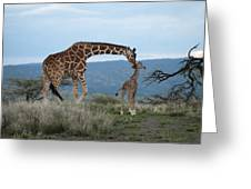 A Mother Giraffe Nuzzles Her Baby Greeting Card