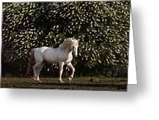 A Mustang Stallion In The Wild Horse Greeting Card by Melissa Farlow