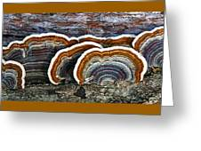 A Natural Landscape Greeting Card