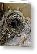 A Nest In A Box Greeting Card