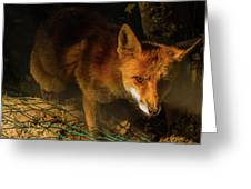 A Nocturne  Meeting With A Fox In The Woodland Greeting Card