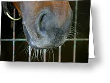 a Nose Knows Greeting Card
