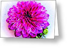 A Painted Dahlia Greeting Card