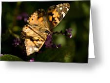 A Painted Lady Butterfly At The Lincoln Greeting Card