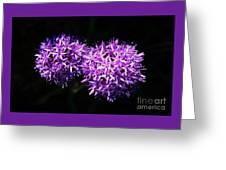A Pair Of Alliums Greeting Card