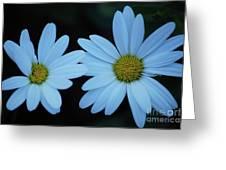 A Pair Of Daisies Greeting Card