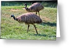 A Pair Of Emu Greeting Card