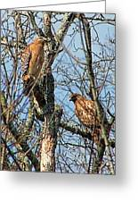 A Pair Of Hawks Greeting Card
