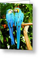 A Pair Of Parrots Greeting Card