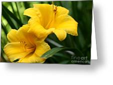A Pair Of Yellow Day Lilies Greeting Card