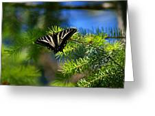 A Pale Swallowtail Greeting Card