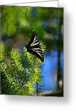 A Pale Swallowtail Vertical Greeting Card