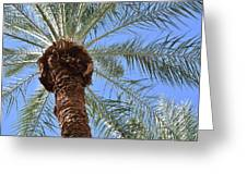 A Palm In The Sky Greeting Card