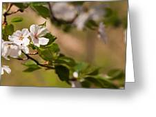 A Panoramic View Of A Cherry Tree Greeting Card