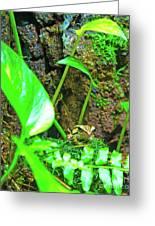 A Paparazzi Shot At The Frog Greeting Card