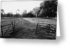 A Pasture Scene  Greeting Card