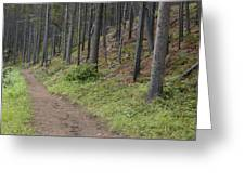 A Path In The Woods Greeting Card