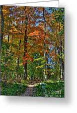 A Path Of Color Greeting Card
