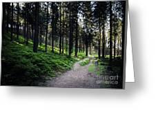 A Path Through A Dense Forest Greeting Card