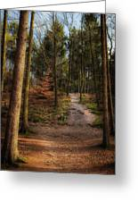 A Path Through The Woods Greeting Card