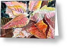 A Peach Of A Poinsettia Greeting Card