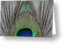 A Peek At A Peacock Feather Greeting Card