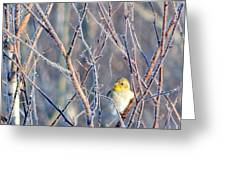 A Peep In The Tree Greeting Card