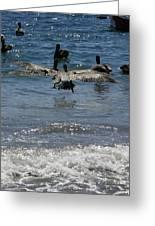 A Pelican In-flight At Playa Manzanillo Greeting Card
