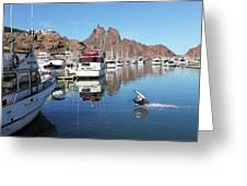 A Pelican Lands In The Old San Carlos Marina, Guaymas, Sonora, M Greeting Card