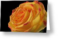 A Perfect Rose #2 Greeting Card